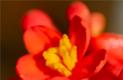 Blomsterupplevelse
