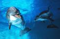 Närkontakt-delfin
